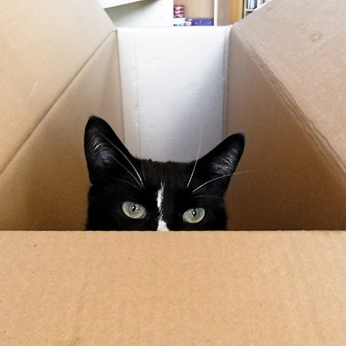Cat in a Moving Box